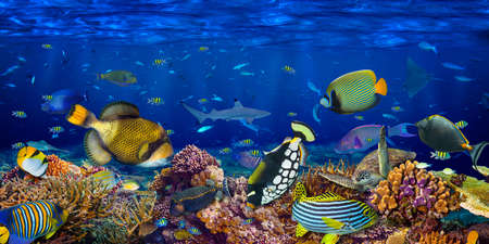 underwater coral reef landscape wide panorama wallpaper background  in the deep blue ocean with colorful fish sea turtle and marine wild life Standard-Bild
