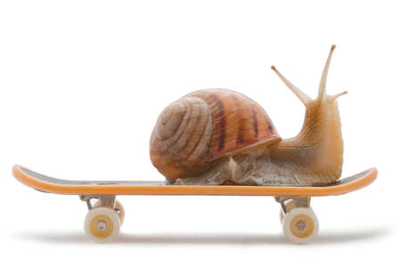 Snail on a skateboard on the white background photo