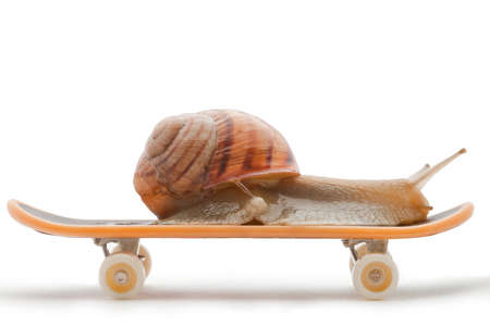 Snail on a skateboard on the white background
