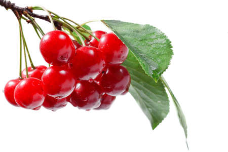 pulpy: Red cherry branch isolated over white