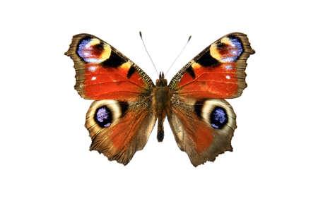 fleck: mariposa, en el fondo blanco
