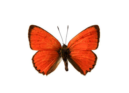 butterfly, in the white background photo