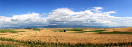 Landscape big panorama - path, field, trees and blue cloudy sky photo