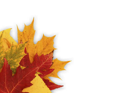 photo of various autumn leaves isolated on white background photo