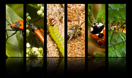 Collection of insects and other invertebrates photo