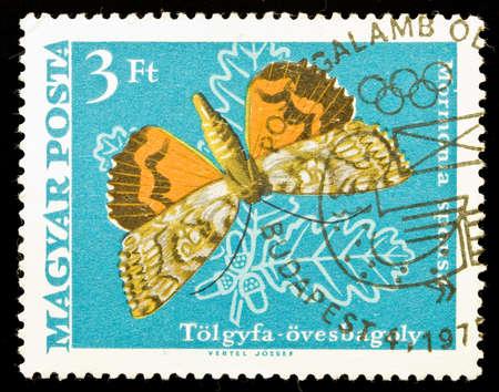 HUNGARY - CIRCA 1975: A stamp printed in Hungary shows butterfly Mormonia Sponsa, circa 1975 Stock Photo - 7149438