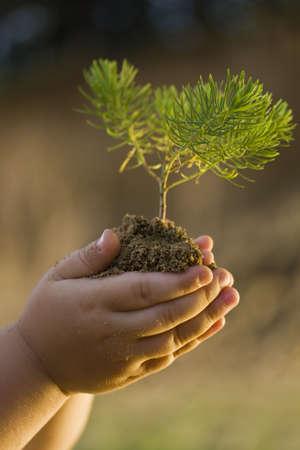 life giving birth: Las manos de los ni�os sosteniendo peque�as plantas creciendo desde el suelo  Foto de archivo