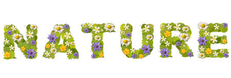 Nature - green leaf whit flower font in white Stock Photo - 7914634