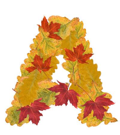 Alphabet of autumn leaves . Letter A photo
