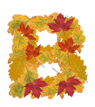 Alphabet of autumn leaves . Letter B photo