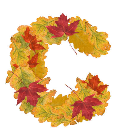 Alphabet of autumn leaves . Letter C photo