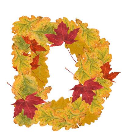 Alphabet of autumn leaves . Letter D photo