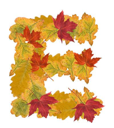 Alphabet of autumn leaves . Letter E Stock Photo - 7999942