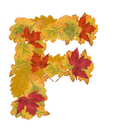 Alphabet of autumn leaves . Letter F photo