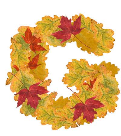 Alphabet of autumn leaves . Letter G photo