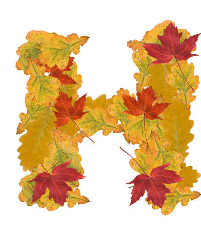 Alphabet of autumn leaves . Letter H photo