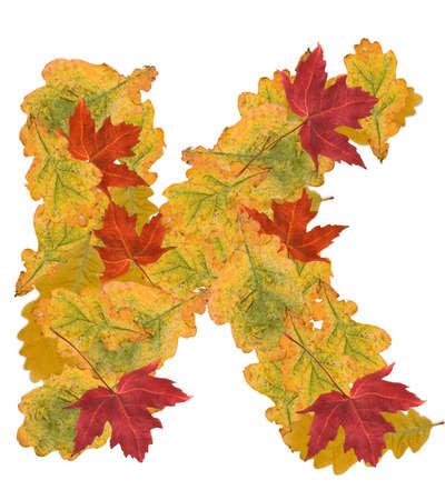 Alphabet of autumn leaves . Letter K photo