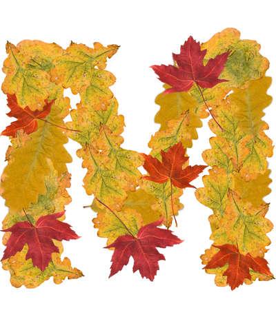 Alphabet of autumn leaves . Letter M photo