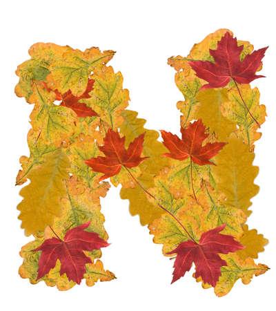 Alphabet of autumn leaves . Letter N Stock Photo - 7999954
