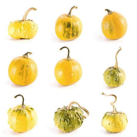 High resolution set of nine diverse colorful pumpkins on white background  photo
