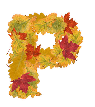 Alphabet of autumn leaves . Letter P photo