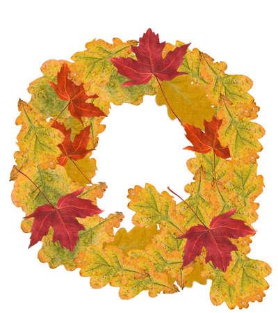 Alphabet of autumn leaves . Letter Q photo