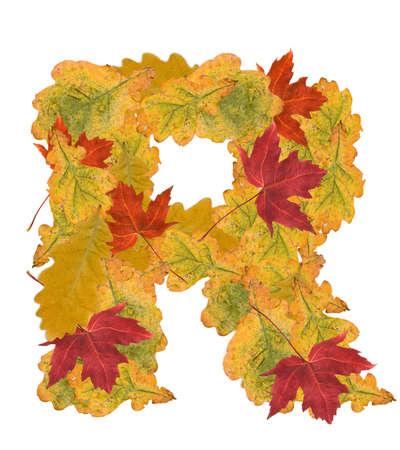 Alphabet of autumn leaves . Letter R photo