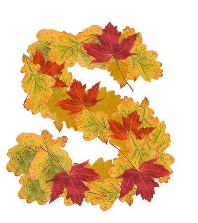 Alphabet of autumn leaves . Letter S photo