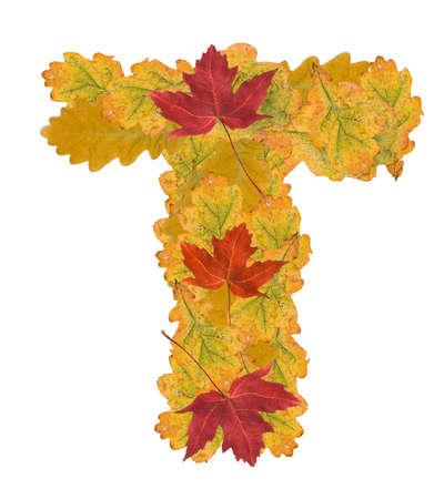 Alphabet of autumn leaves . Letter T photo