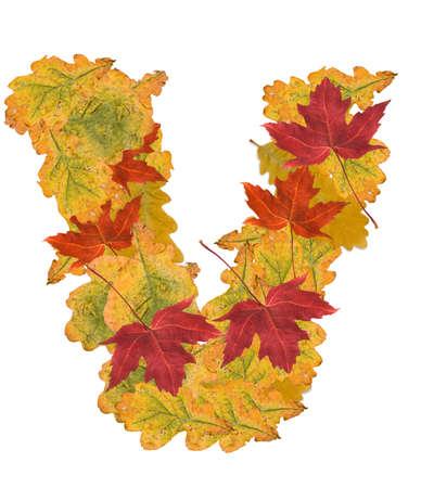 Alphabet of autumn leaves . Letter V photo