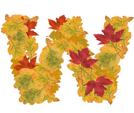 Alphabet of autumn leaves . Letter W photo
