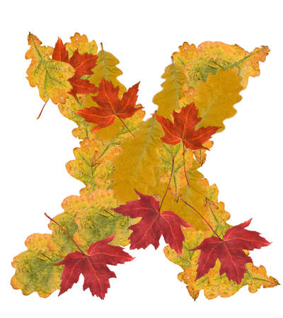 Alphabet of autumn leaves . Letter X Stock Photo - 7999941