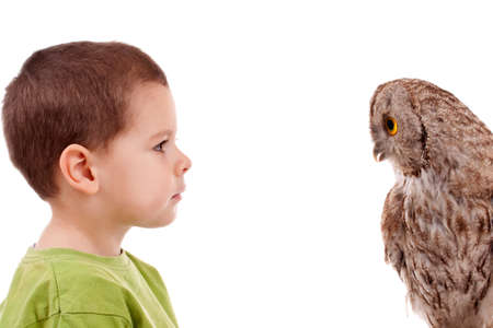 Young boy observing young owl, isolated in white photo