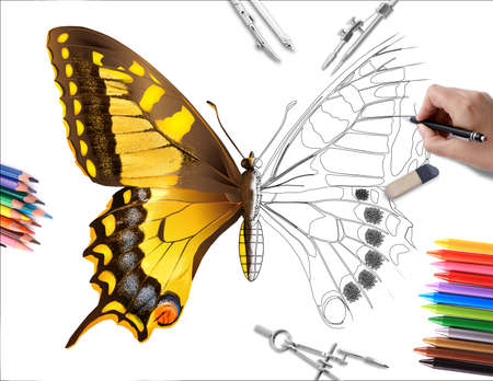 pencil sketch: Hand drawing a yellow buterfly