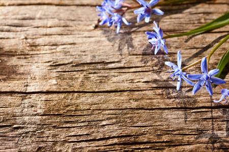 Woodland spring flowers on wood background Stock Photo - 9719121