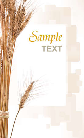 Wheat isolated on white with text photo