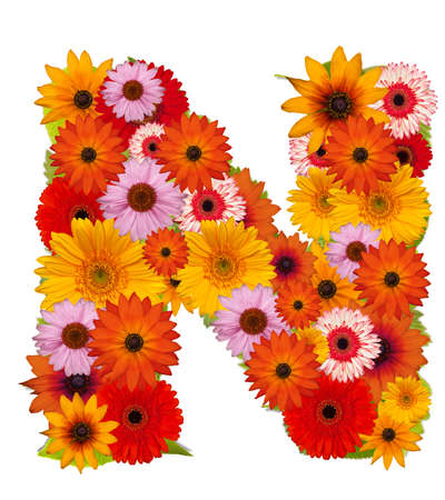 Flower alphabet isolated on white. Letter N photo