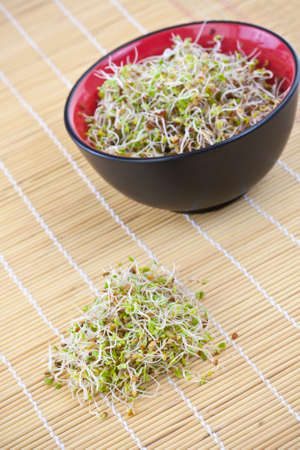 Fresh sprouts in a bowl in wooden background photo