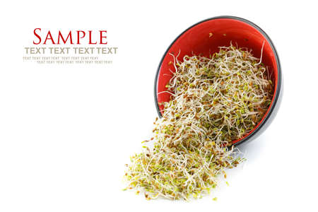 Fresh sprouts in a bowl  photo