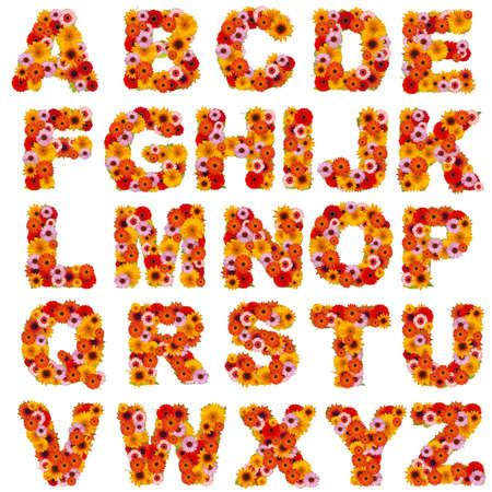 abecedario: Alfabeto de flores aisladas en blanco