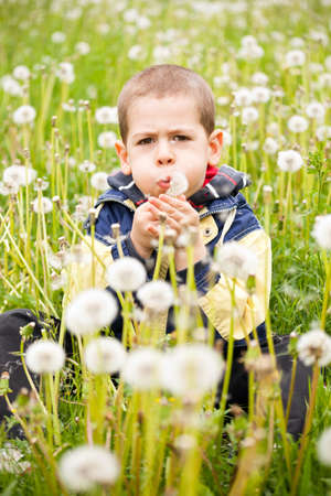Preschooler boy blowing dandelion in nature  photo