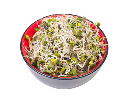 Fresh sprouts in bowl, white background photo
