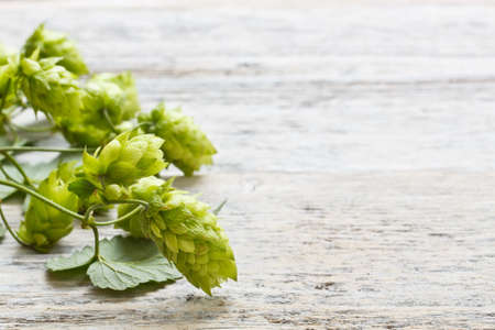 bitterness: Green plant hops on old wood table