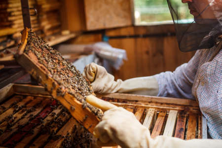 El apicultor tiene control sobre un marco con miel Foto de archivo - 20343773