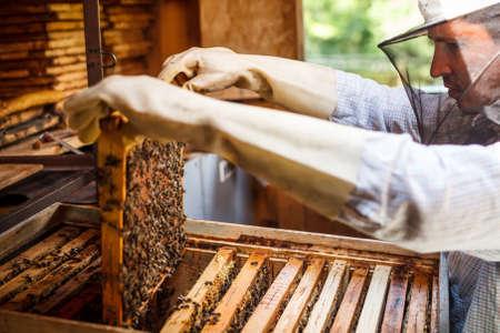 Apicultor de trabajo y el marco con abejas Foto de archivo - 20462943