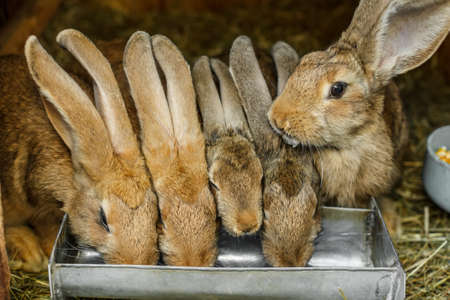 the hutch: Rabbits drinking inside a cage