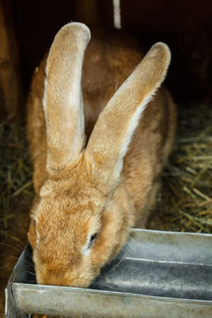 the hutch: Rabbit drinking inside a cage