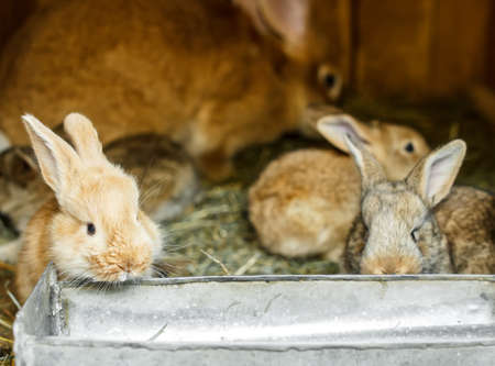 the hutch: Young rabbits in a hutch Stock Photo