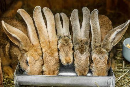 the hutch: Rabbits drinking inside a hutch