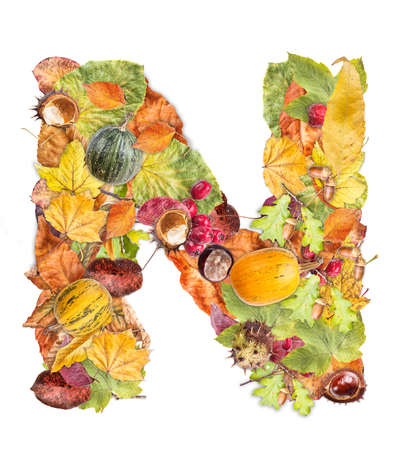 Letter N made of autumn colored leaves isolated on white background photo
